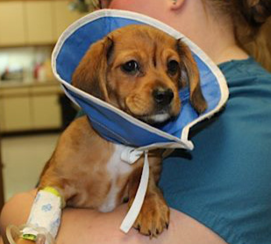 Case-Study_Hearts-United-for-Animals