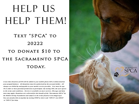 SPCA_LawnSign